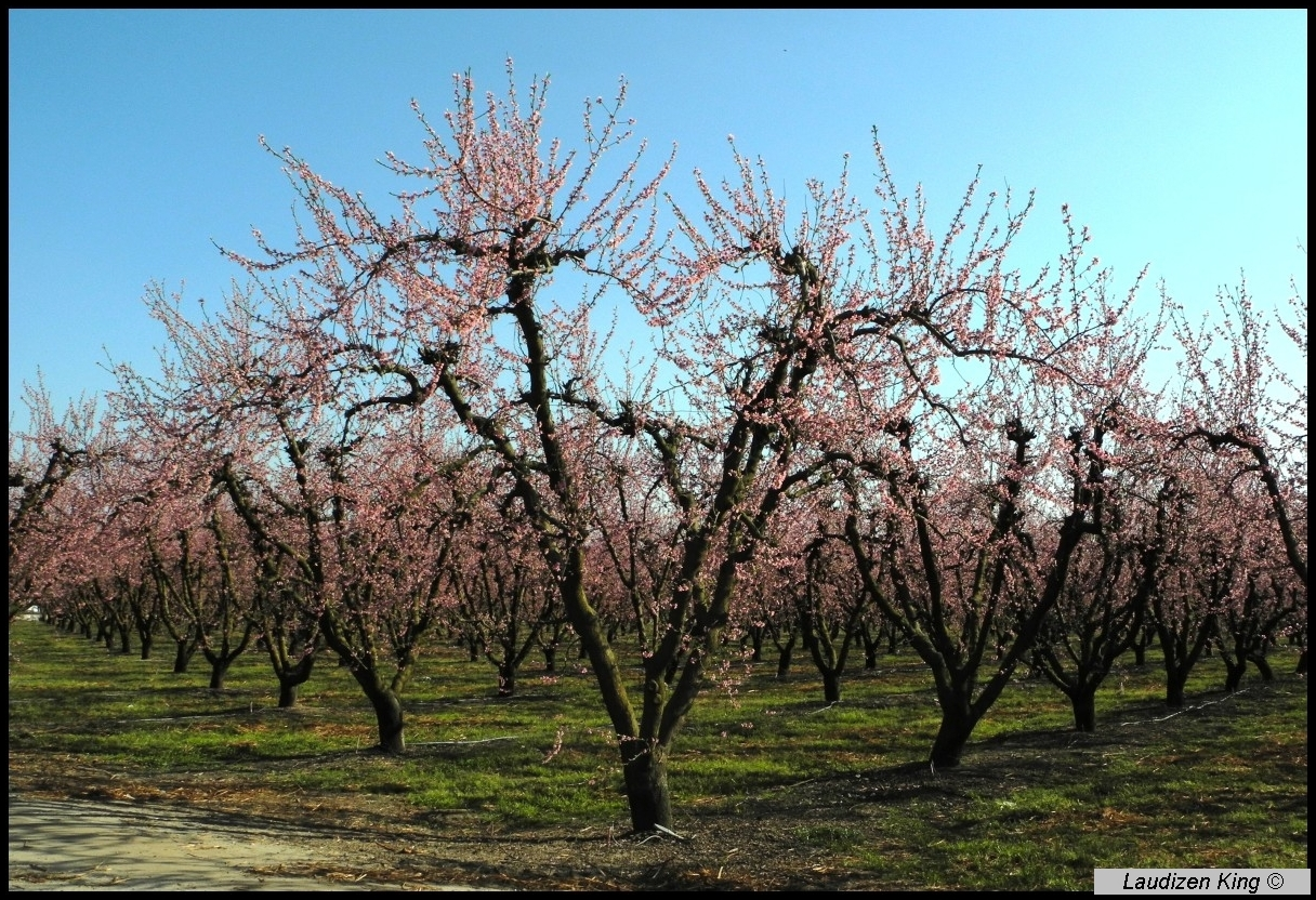 Orchard Land, Modesto, California